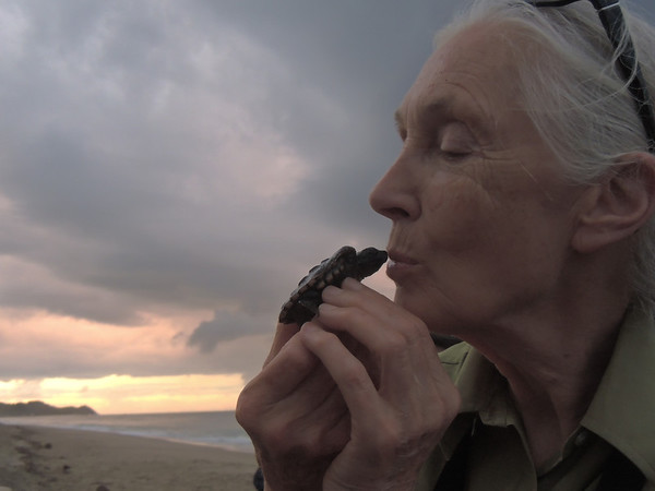 Dr. Goodall's 2013 Travel Photos